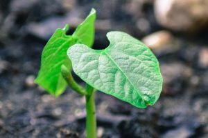 MEXT scholarship basics sprout emerging from soil TranSenz